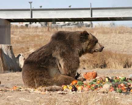 Wild Animal Sanctuary Grizzly bear