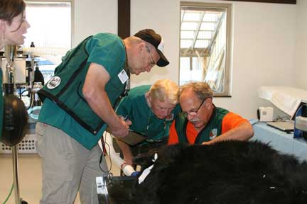 Wild Animal Sanctuary black bear dental treatment