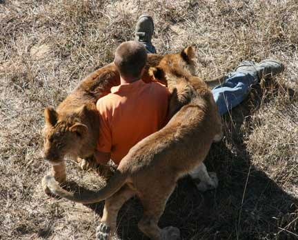 Wild Animal Sanctuary lion rescue