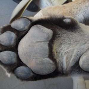 A paw at PAWS
