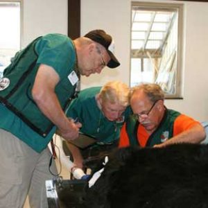 October 2010 black bear exam.